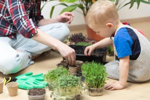 young child planting chia seeds with adult